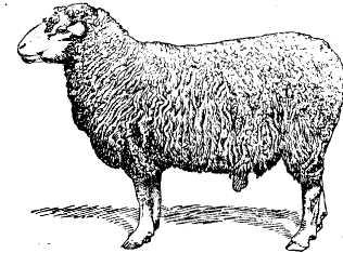 Картинки для детей овечка  Картинки Detkitoday