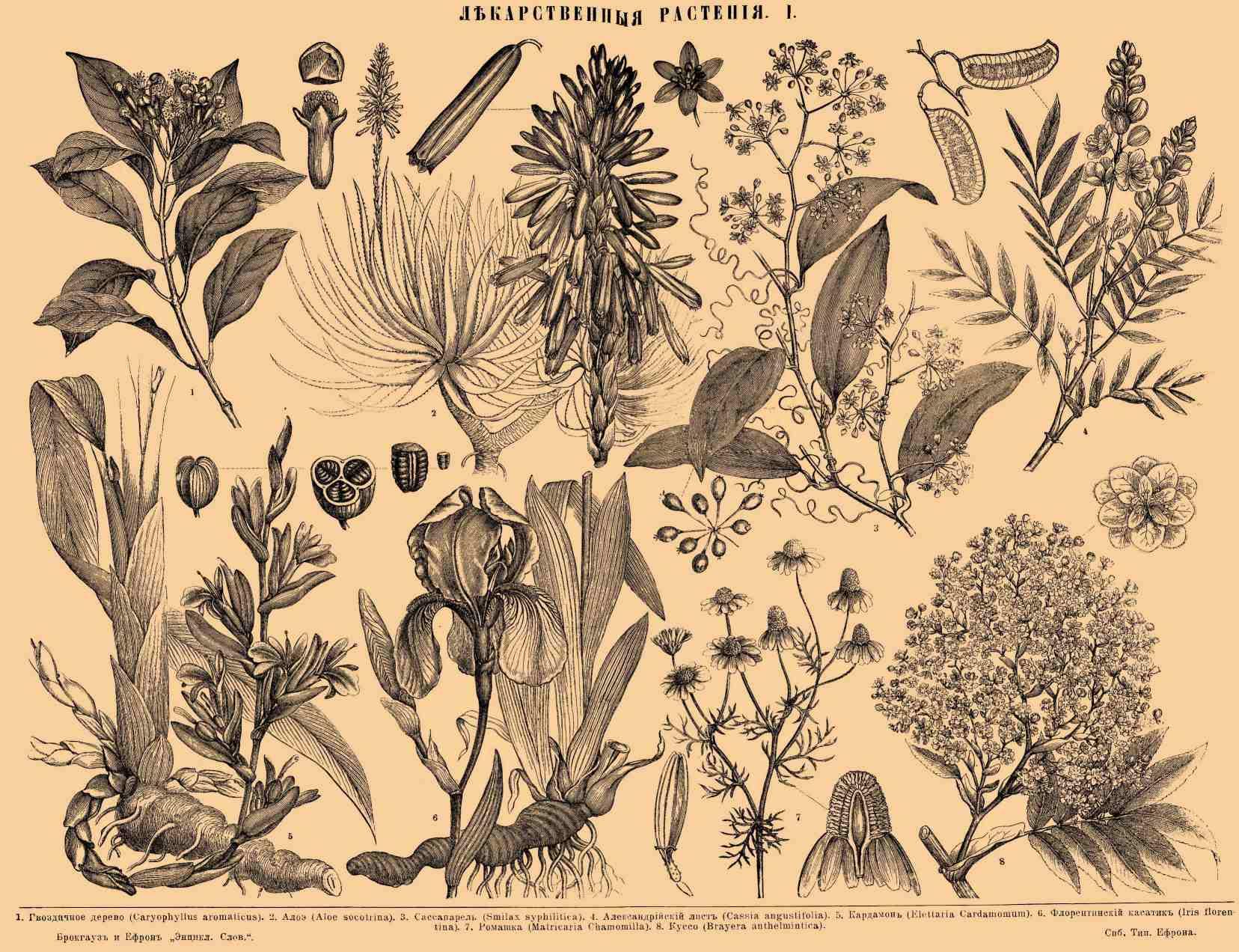травник лекарственные растения картинки товаров категории