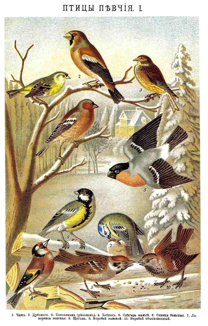 Птицы певчие i