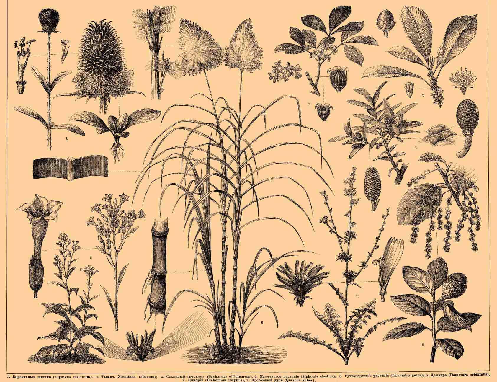 картинки растений: