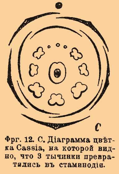Фиг.12 С. Диаграмма цветка,