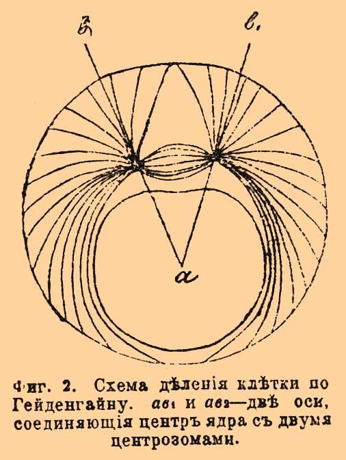 Центросфера