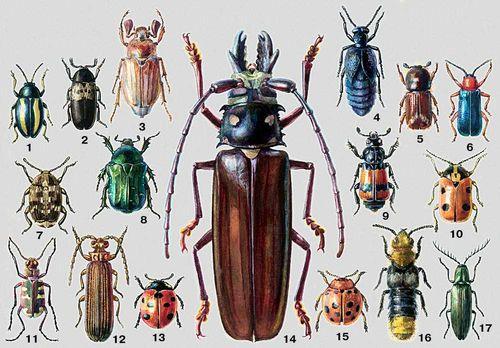 типограф жук фото