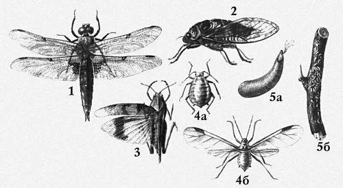 Взрослые формы насекомых: 1