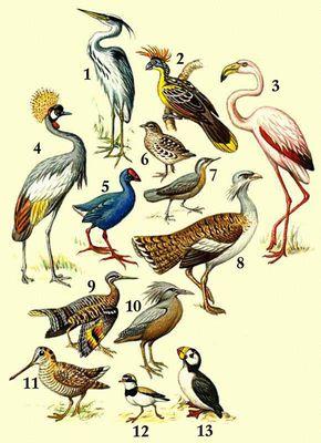 Картинки птица сапсан 4