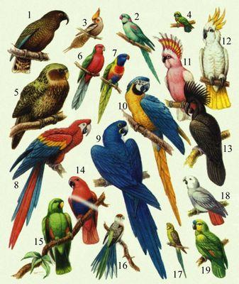 Ара попугай рисунки