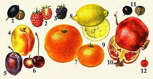 Апокарпные плоды: 1 — сочная