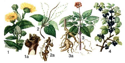 Лекарственные цветы и их виды.