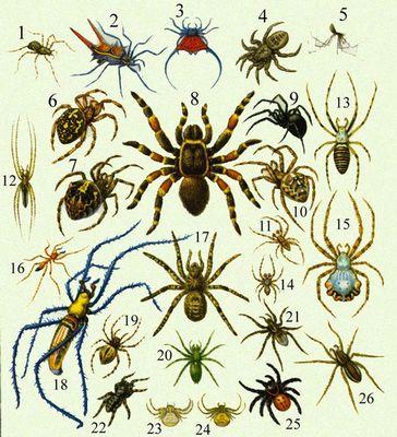 Вследствие ихlycosa червь или вдова степная облигатные хищники, но. современных куплю следующие виды затем на нашей...