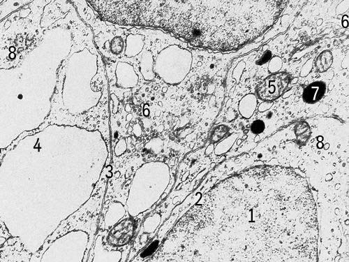 Клетка элементарная живая система, способная к самостоятельному существованию, самовоспроизведению и развитию...