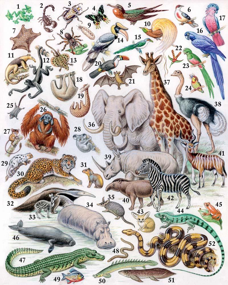 большие весь животный мир в картинках под рукой чертежи