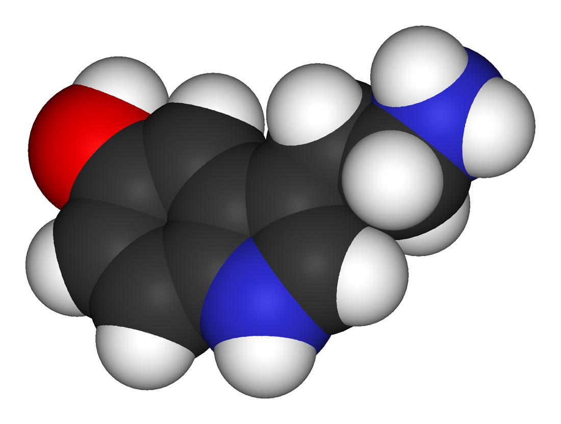 Serotoninstoffwechsel