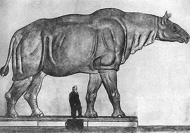 http://dic.academic.ru/pictures/dewiki/69/Extanbaluchitherium.jpg