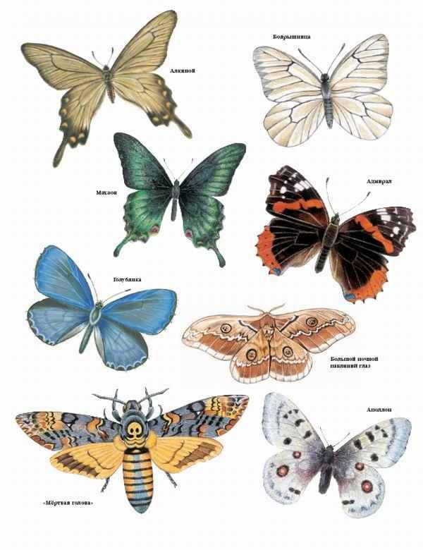 названия насекомых с знаком