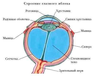 Цены на очки для зрения в новосибирске