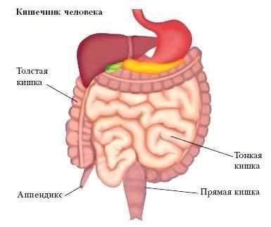 как очистить кишечник от паразитов таблетки