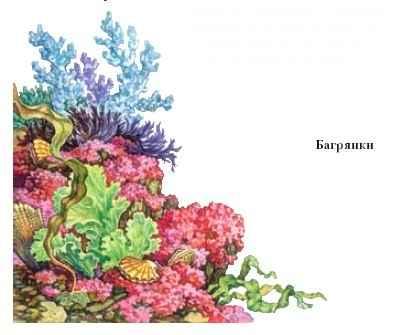 водоросли очищения организма
