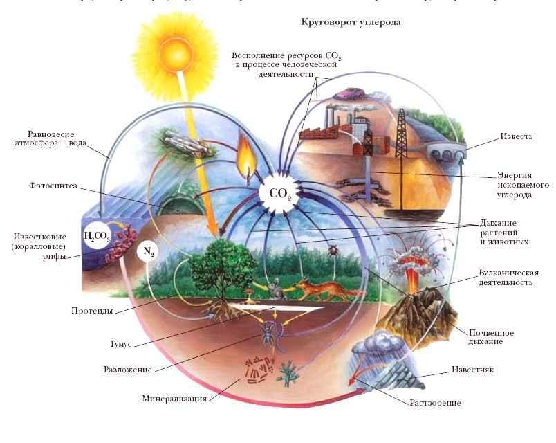 Все циклы круговорота веществ