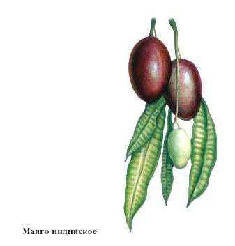 знакомства манго что это такое