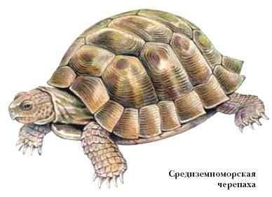 Черепаха символ женской сексуальности