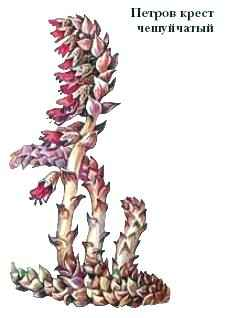 фото петров крест