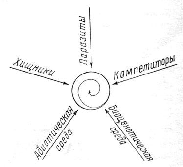 Рис. Модель адаптации вида. В центре - сфера изменений его адаптации в процессе биоценогенеза