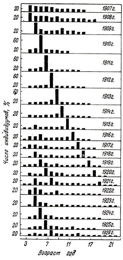 Возрастная структура популяции сельди (Clapea harengus: Тимофеев-Ресовский, 1973)