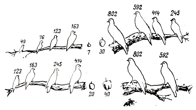Рис. 24. Размещение по нишам нескольких видов питающихся плодами лесных голубей Новой Гвинеи в зависимости от размера видов (масса в г), размера плодов деревьев (средний диаметр в мм) и предпочитаемой толщины их ветвей (Уиттекер, 1980)