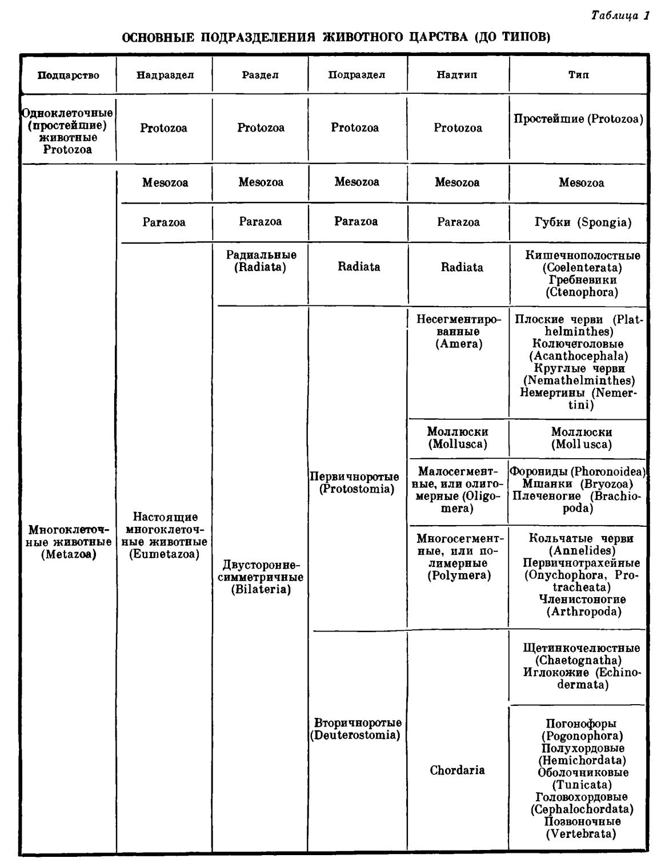 классификация животных схема.