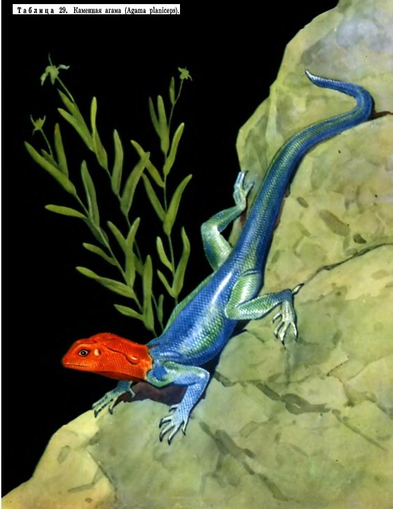 http://dic.academic.ru/pictures/enc_biology/animals/4_2-tablitsa_29.jpg