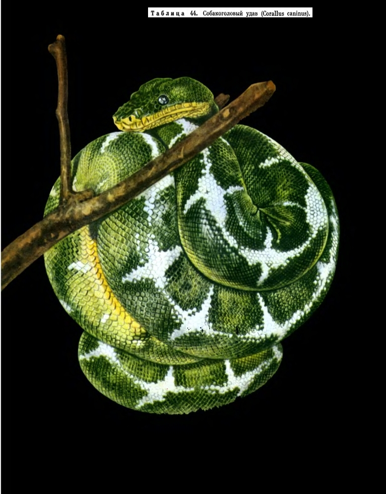 http://dic.academic.ru/pictures/enc_biology/animals/4_2-tablitsa_44.jpg