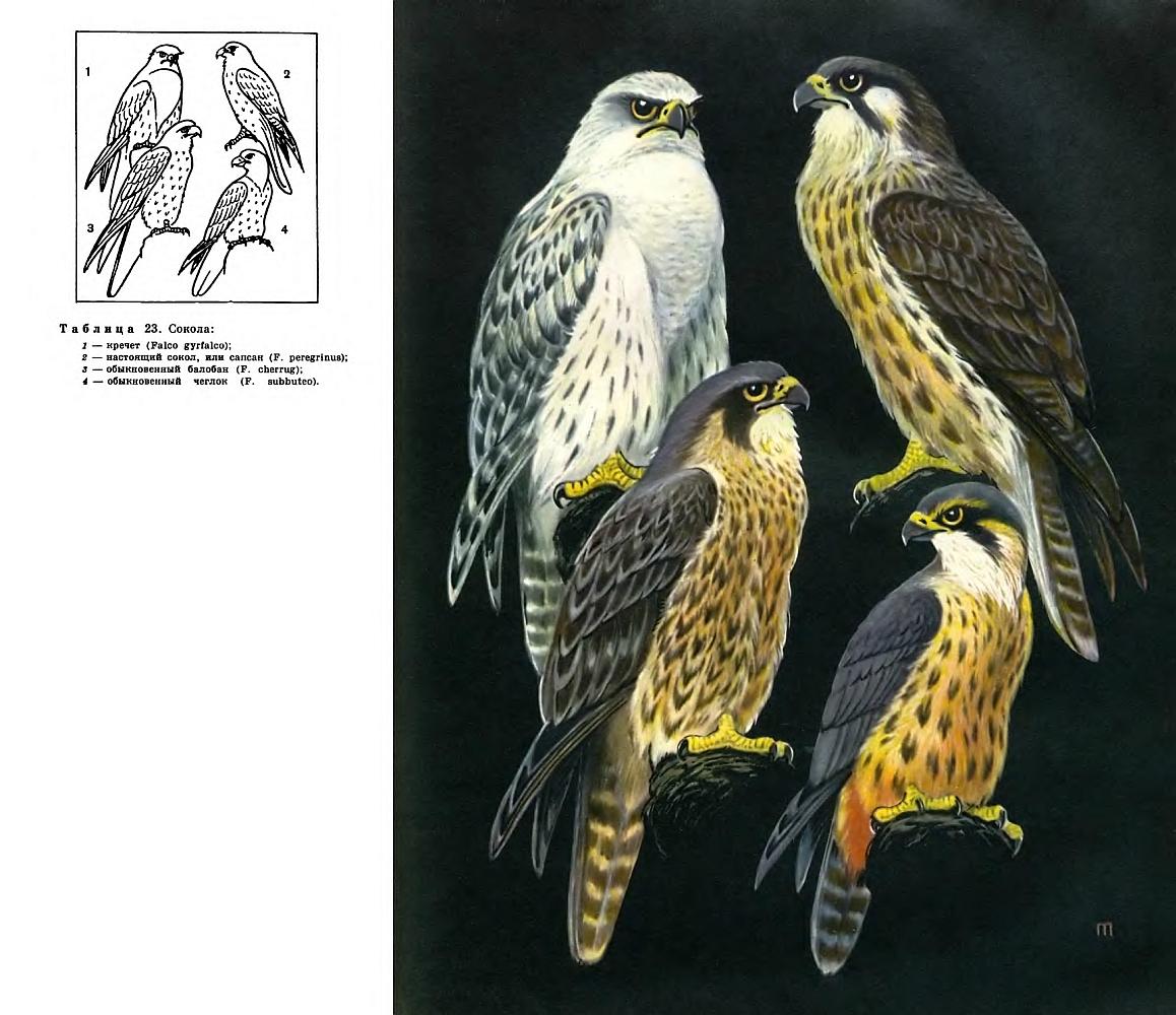 строение внешнего вида схема птицы