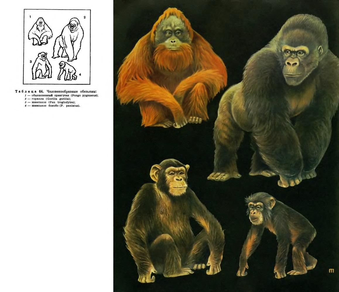 Один рисунок человека образные обезьяны 4