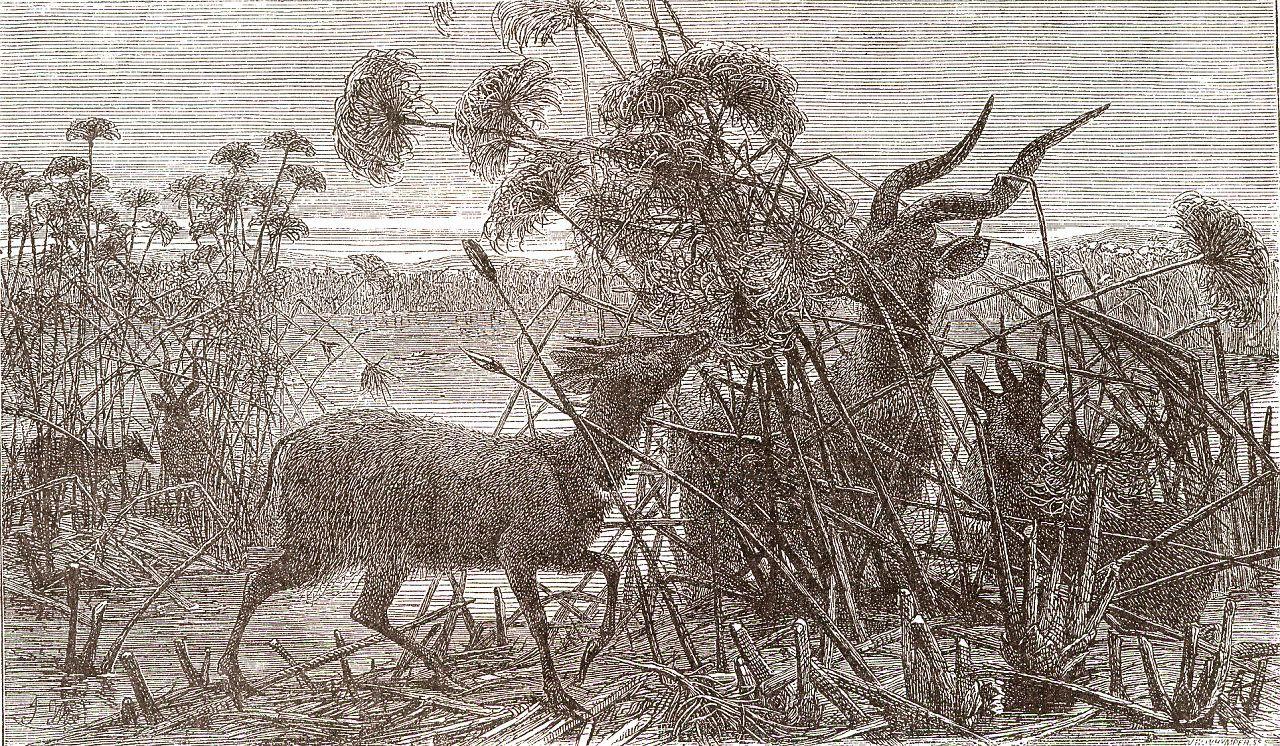 Антилопы в прибрежных зарослях