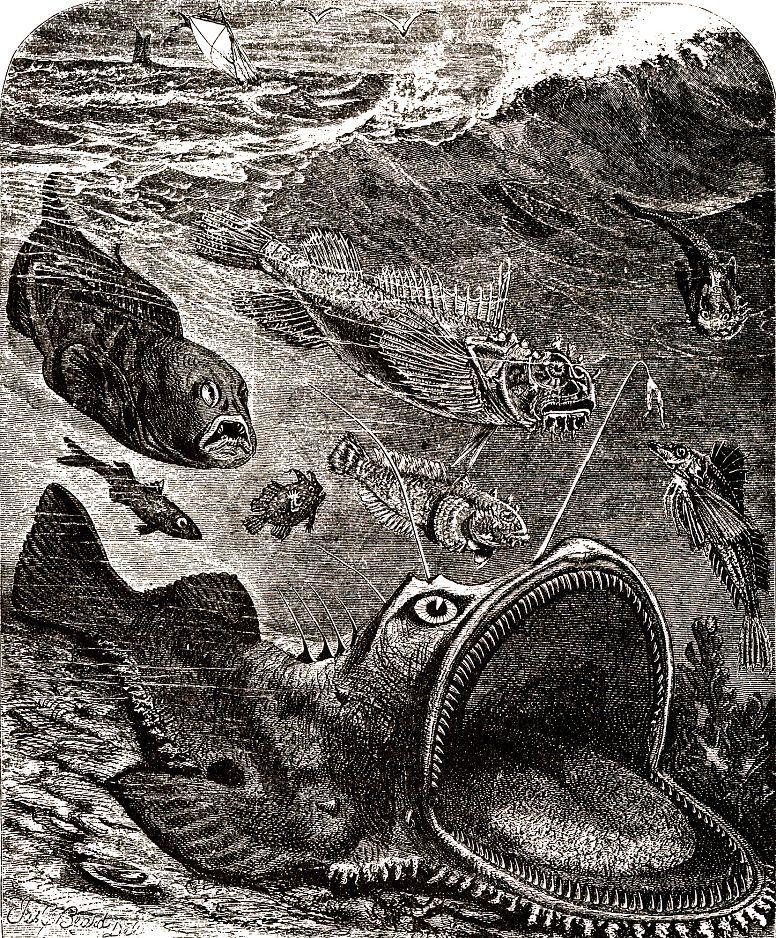 Европейский удильщик, или европейский морской черт (Lophius piscatorius)