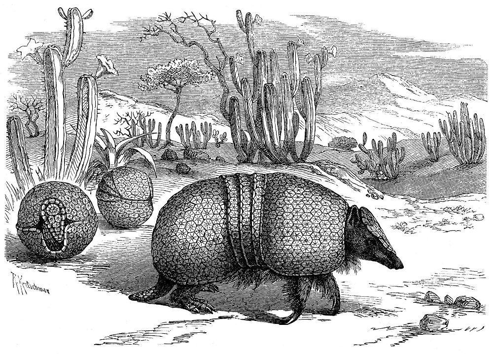 Гигантский броненосец (Priodontes maximus)