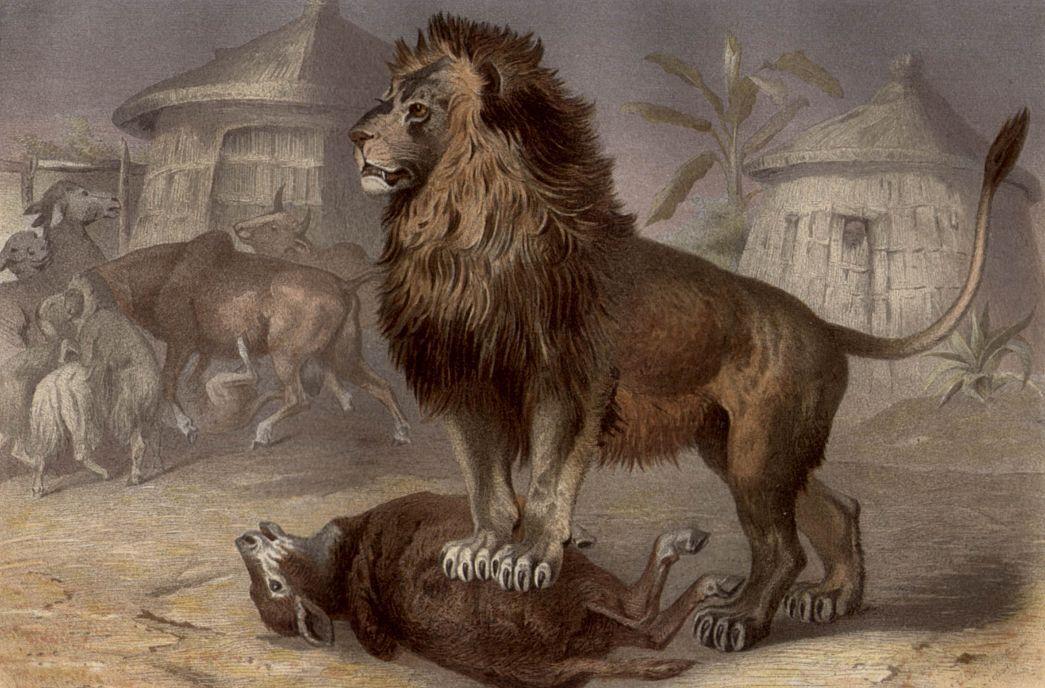 Лев (Pantherа 1ео)