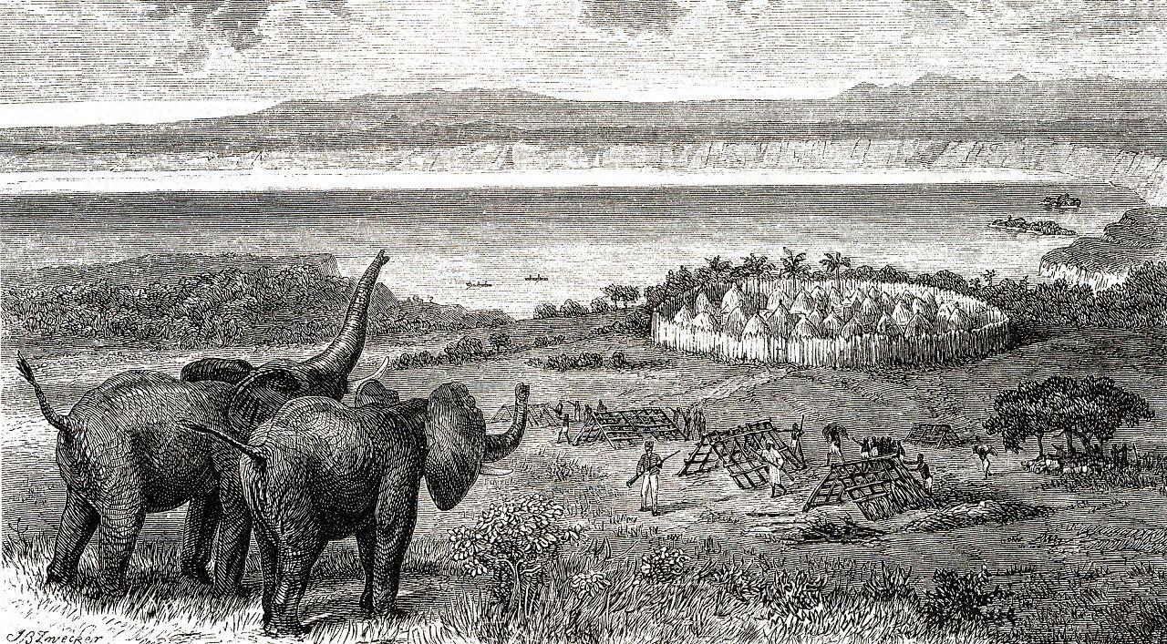 Местные жители преследуют слонов из-за слоновой кости