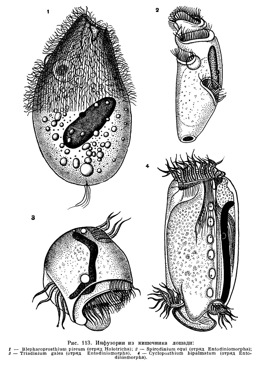 прополис от паразитов отзывы
