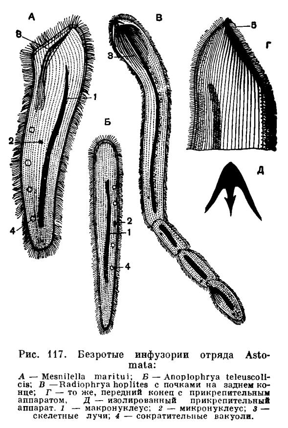паразиты кишечника у детей