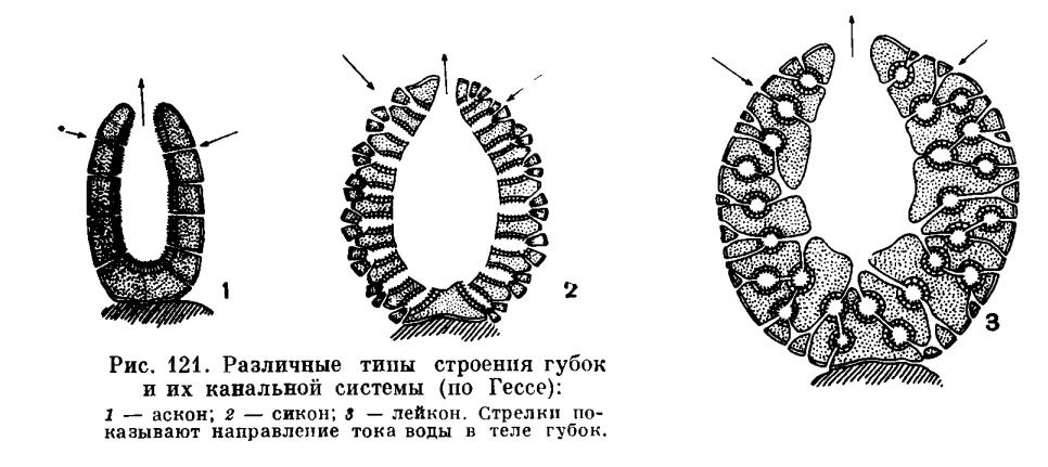 ТИП ГУБКИ (PORIFERA или