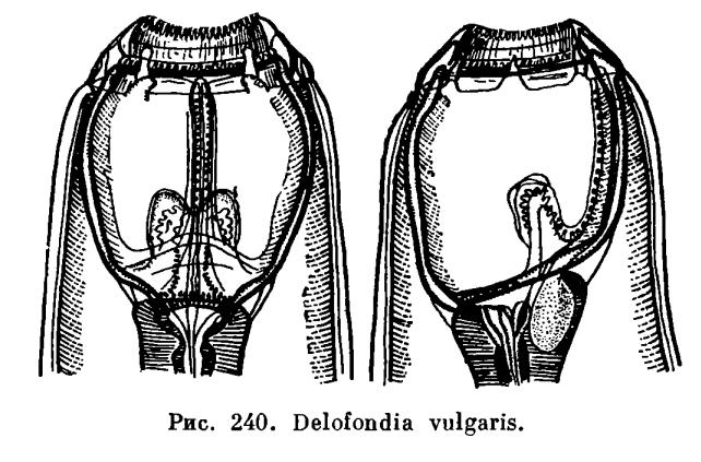 смотреть паразиты теле человека