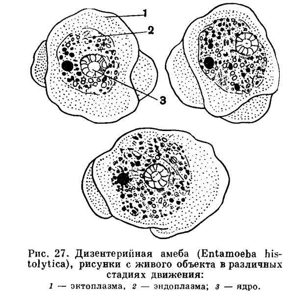 чистка жкт от паразитов и шлаков