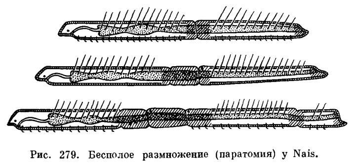 279) на теле червя,