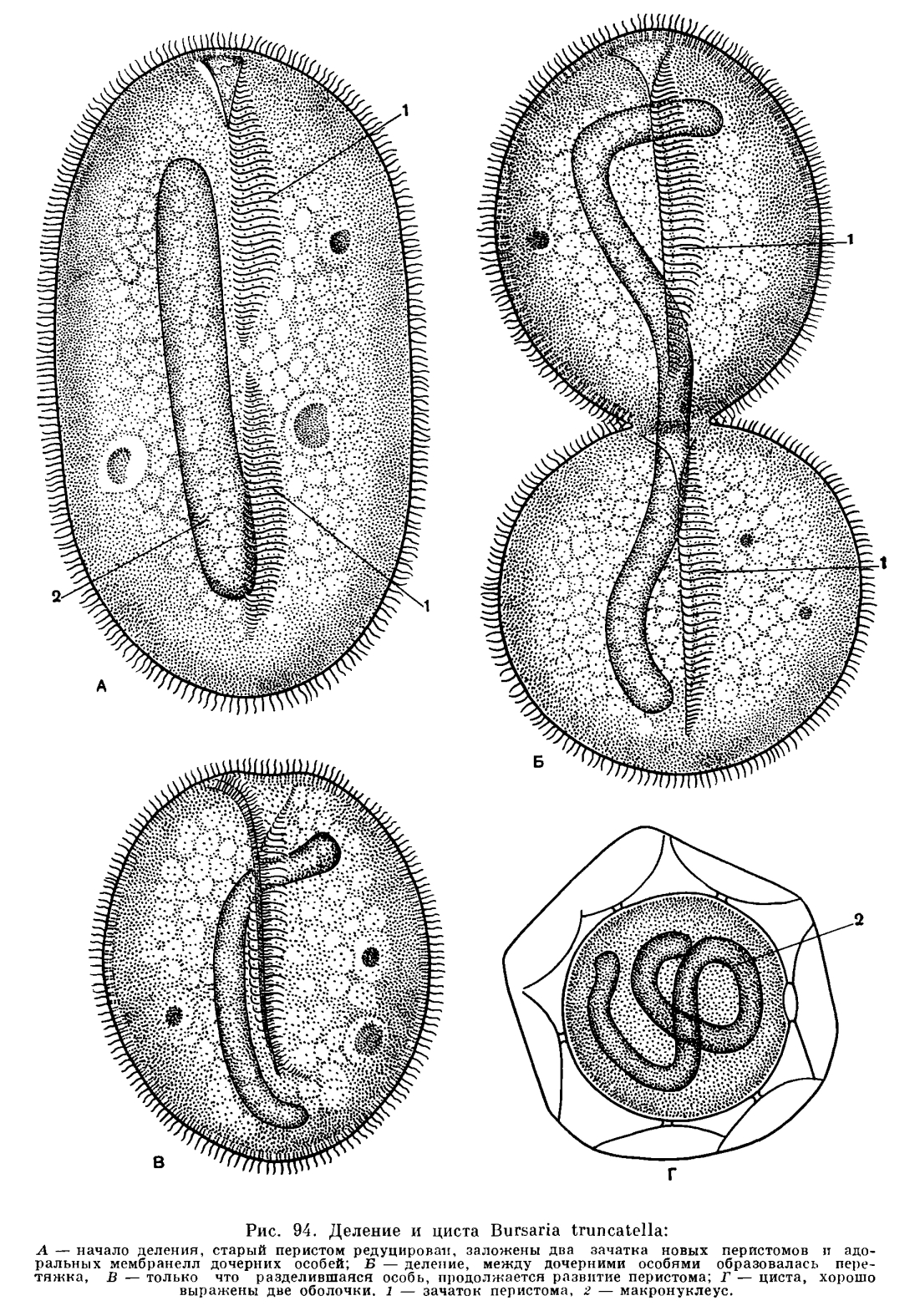 паразиты человека доклад