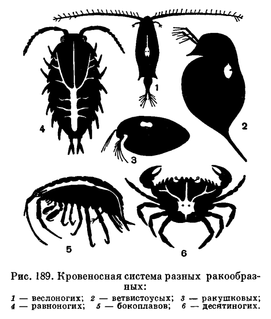 паразиты покидают организм