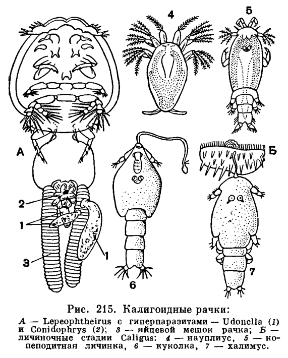 какие таблетки паразитов в организме человека