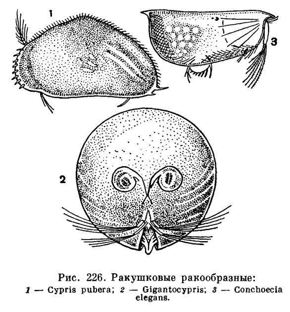 http://dic.academic.ru/pictures/enc_biology/animals/ris._2_226.jpg
