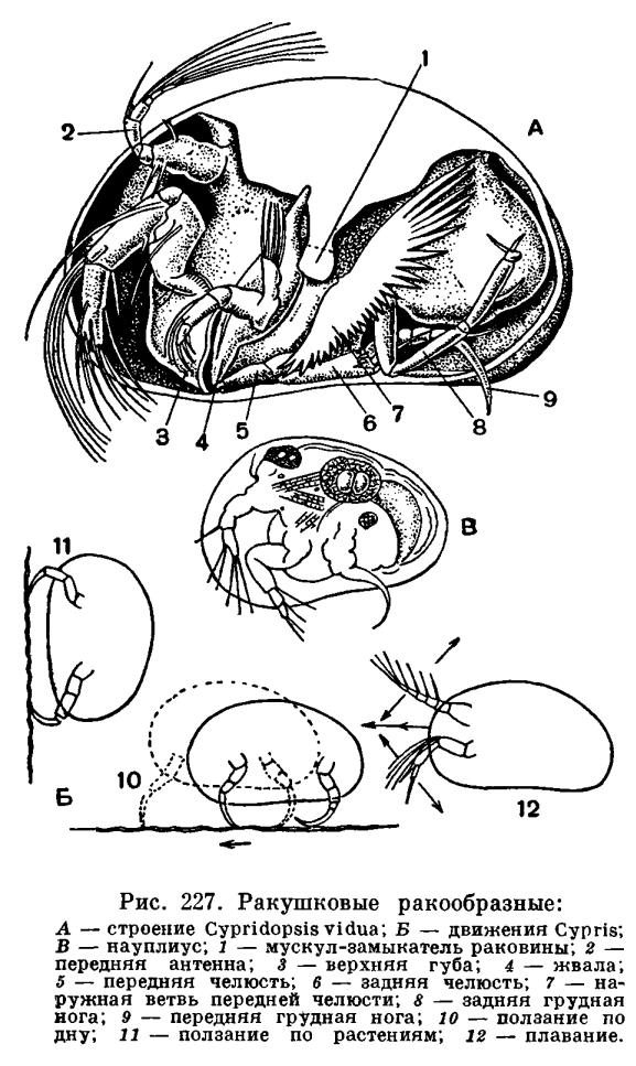 http://dic.academic.ru/pictures/enc_biology/animals/ris._2_227.jpg