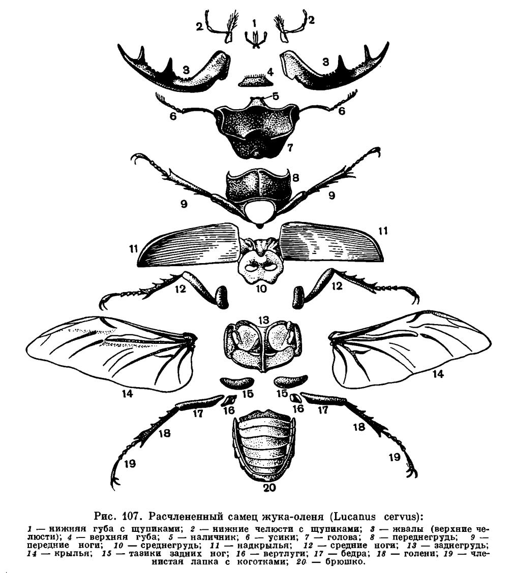 Подкласс Открыточелюстные или Настоящие насекомые...